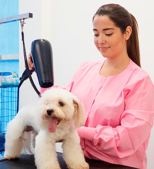Contabilidade para Clínicas Veterinárias e Pet Shop em Mogi das Cruzes - Contabilidade para Clínicas Veterinárias e Pet Shop em Mogi das Cruzes | Pontual Contabilidade